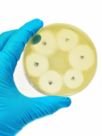 antimicrobial: Antimicrobial Susceptibility Testing Stock Photo