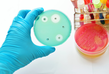 susceptibility: Antimicrobial susceptibility testing in petri dish