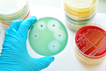antimicrobial: Antimicrobial susceptibility testing in petri dish