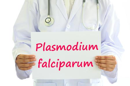 plasmodium: Plasmodium falciparum