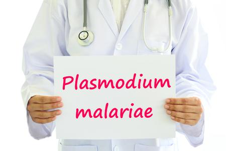 plasmodium: Plasmodium malariae