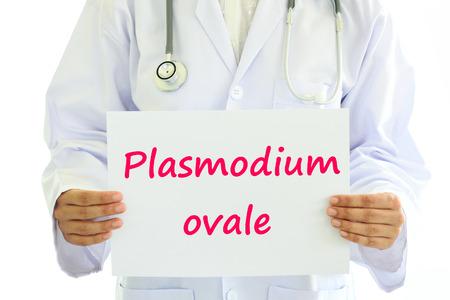 plasmodium: Plasmodium ovale