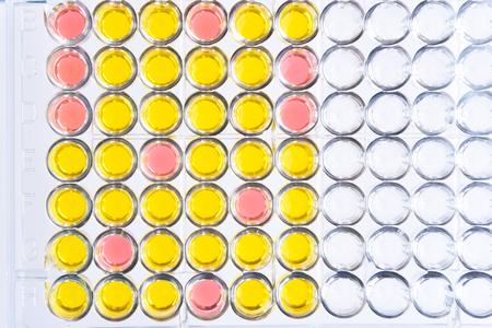 Enzyme-linked immunosorbent assay or ELISA plate Foto de archivo