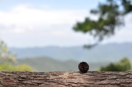 Pine cone: c�ne de pin avec fond de ciel