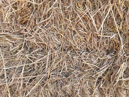 roughage: Hay