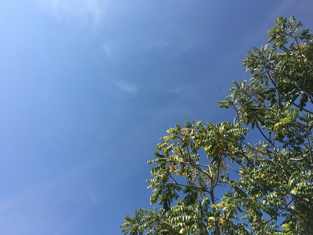 blue background: Tree with blue sky background