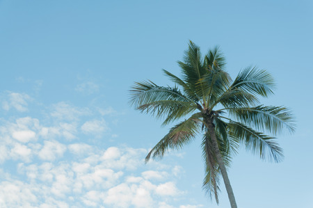 coconut tree with blue sky Stock Photo