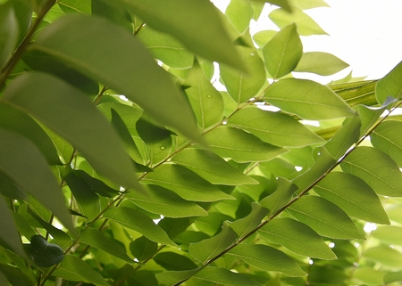 green leaf nature background