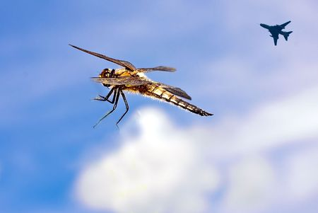 Dragonfly in flight with F-16 photo