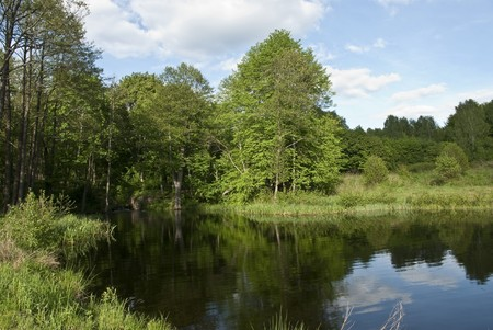 Small lake in the woods Stock Photo