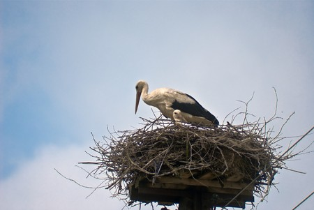 Storks in the nest photo