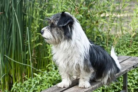vigilant: Vigilant guard dog