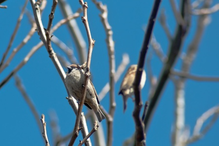 sparrows photo
