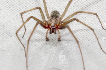 big spider on a light background Stock Photo