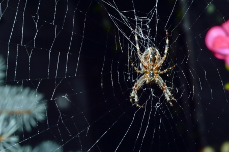 Hunting spider in its web photo