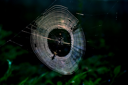 Spider undid their nets for a catch Stock Photo