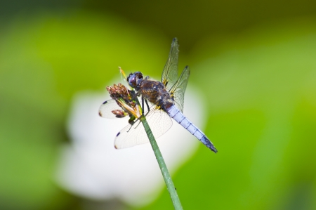 Dragonfly on water photo