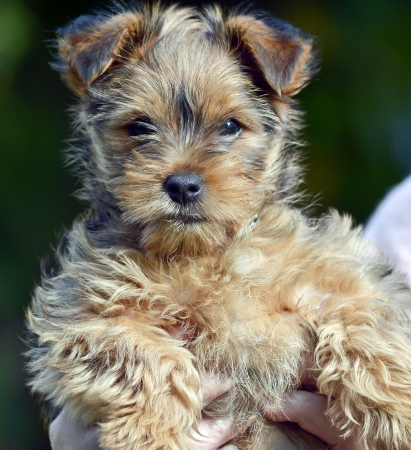 A young puppy Stock Photo
