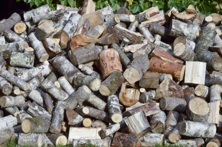 Birch and pine wood - firewood for the winter