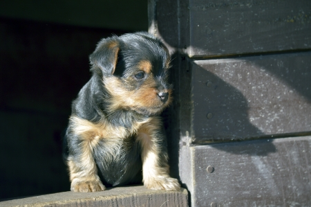 A young puppy in a large shed