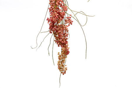 The pink fruit of the Pepper Tree (Schinus molle)