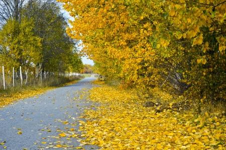 Beautiful sunny autumn