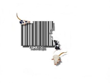 Concept, barcode cheese and rats unframed photo