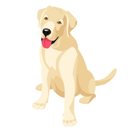 Labradors puppy - affectionate and devoted  friend Vector