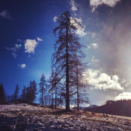 cloude: Blue sky  black tree