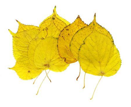 autumn leaves isolated on white background Stock Photo - 1977616