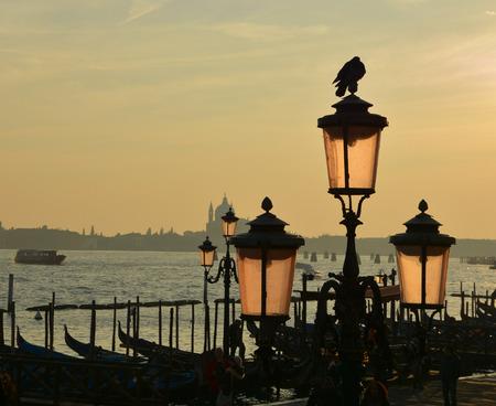 lamp post: pigeon on the lamp post, Venice