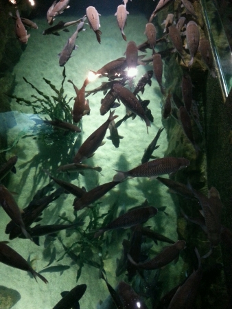 aquaria: a group of fish in the big aquarium