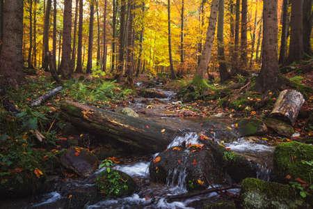 Stream in Valley in Mala Fatra Mountain Range near Zilina, Slovakia
