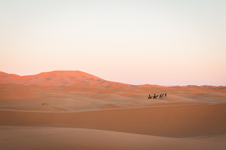 Caravan of camels and people trekking through the Sahara desert.