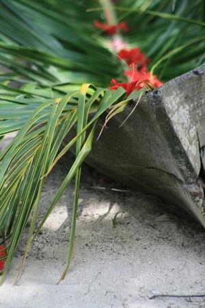 古い熱帯カヌー 写真素材