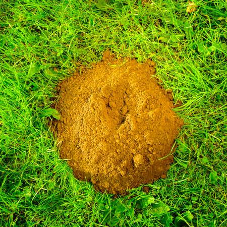 molehill: Mole hill created by the European Mole (Talpa Europea). Stock Photo