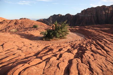 Dramatic patterns of the arid Snow Canyon landscape in Utah 免版税图像