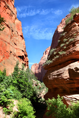 Rock canyon walls of Taylor Creek in Zion National Park 写真素材