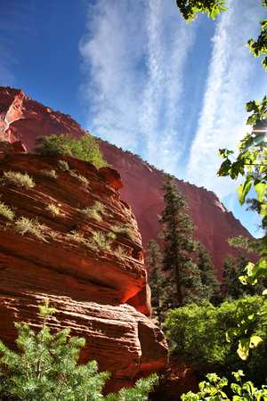 Red canyon walls of Taylor Creek in Zion