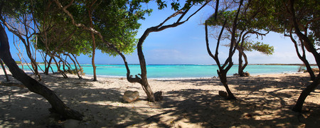 Panoramic of the turquoise waters and trees of Baby Beach Aruba