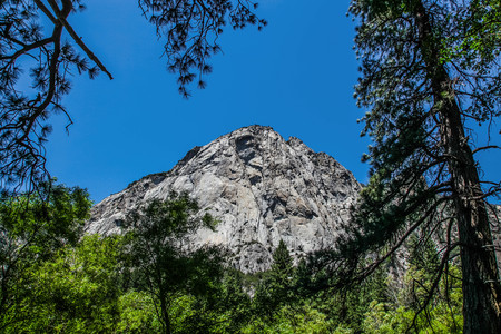 Granite mountain face seen through the pine trees in Kings Canyon National Park
