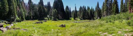 Panoramic view of lush meadow in Big Stump Basin Sequoia National Park 版權商用圖片