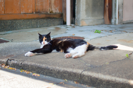 Cat taking a nap on the street of Kyoto, Japan. Kyoto is themed with the Japanese traditional atmosphere from long time ago.