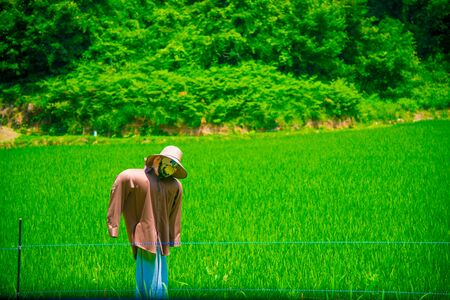 Rice Field in Toyama, Japan. Japan is a country located in the East Asia.
