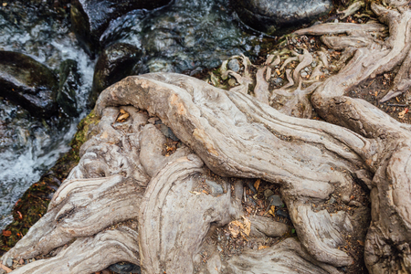 Flowing river by old tree root