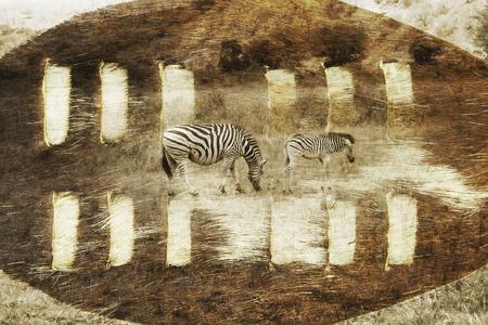 zulu: South African safari digital image with a Zulu Shield and zebra. Stock Photo