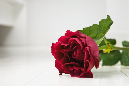 floorboards: Single Red rose on white wooden floorboards