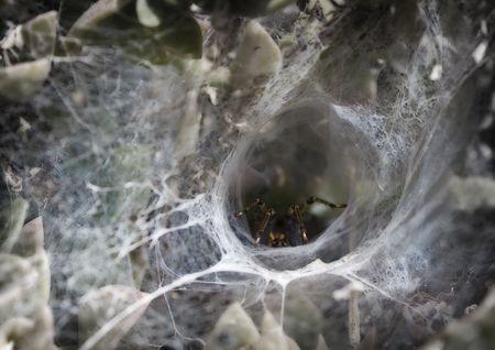 arachnoid: Spider waiting for prey