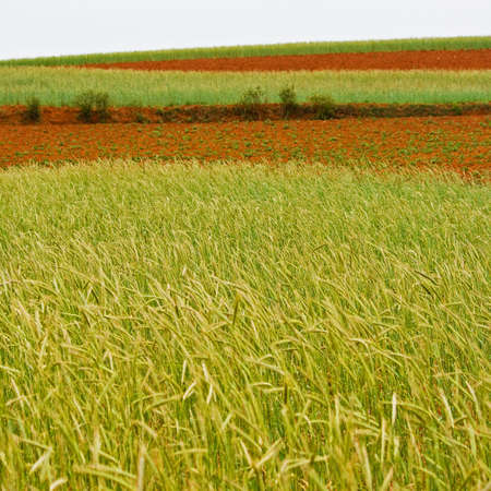 non cultivated: Farmland