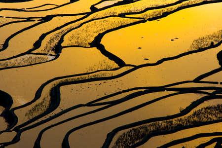 yuanyang: Terraced rice field  Yuanyang Hani